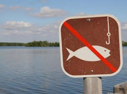 Нерест 2020: терміни заборони для Житомирських рибалок