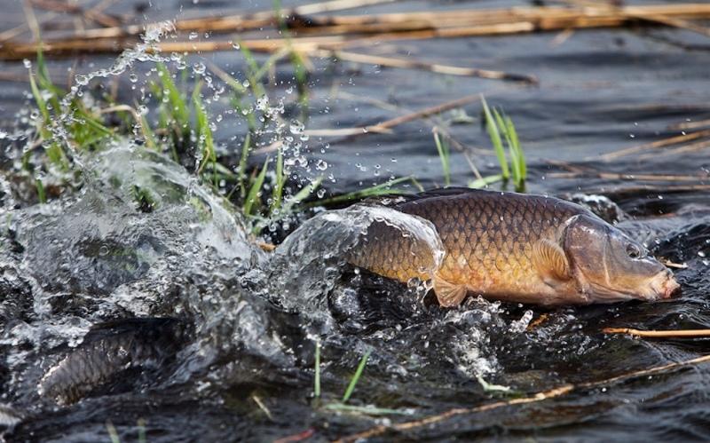 На Любарщині рибоохоронні патрульні викрили двох порушників