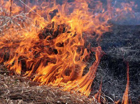 Упродовж доби вогнеборці області ліквідували три загоряння сухостою