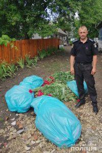 Жительці Любарщини загрожує кримінальна відповідальність за вирощування снодійного маку