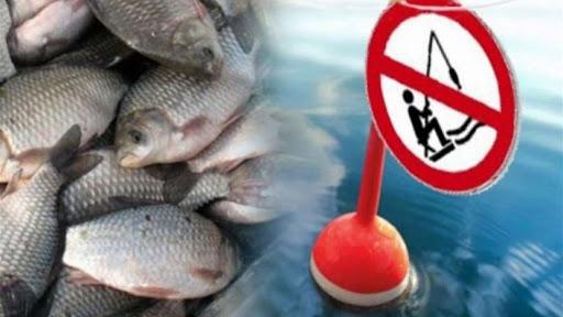 На Житомирщині з листопада почала діяти заборона на вилов риби