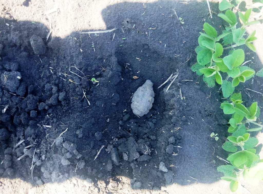 На Любарщині піротехніки знищили артснаряд і ручну гранату