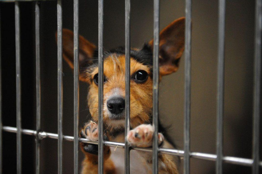 «Ні» жорстокості: що змінює закон про захист тварин?